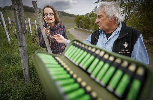 Cornelia Maute schaut sich zusammen mit dem Korber Ökoweinbau-Pionier Hermann Schmalzried die Reben vor der Behandlung genau an. Foto: Gottfried Stoppel