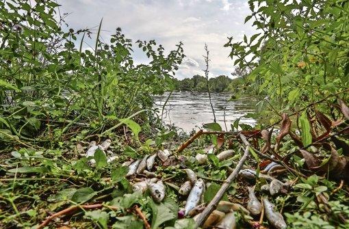 Fischsterben im Max-Eyth-See