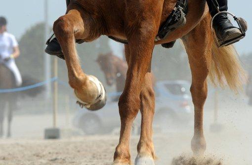 Tierarzt muss nach Tod eines Pferdes zahlen