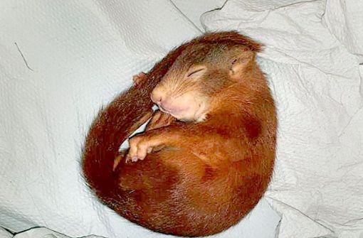 Karl-Friedrich schläft. Foto: Polizei Karlsruhe