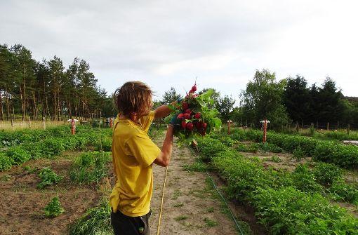 Digital gärtnern, aber real ernten
