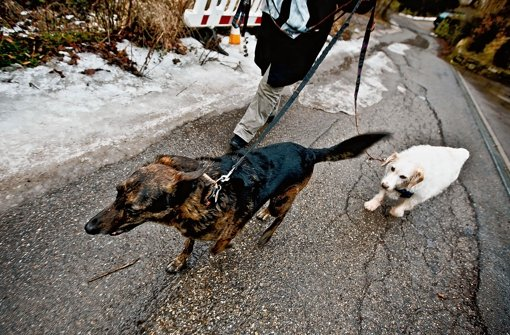 Bruno und Melina, den beiden Hunden von Caren Pilz, geht es wieder gut, nachdem sie Gift gefressen hatten Foto: Piechowski