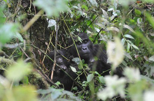 Urlaub in Uganda: Die Perle Afrikas