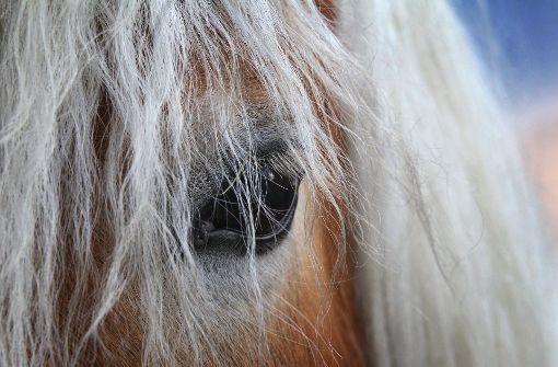 Pferde müssen nach Virusinfektion getötet werden