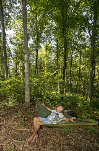 Zweiter Schritt: Waldbaden Foto: factum/Weise