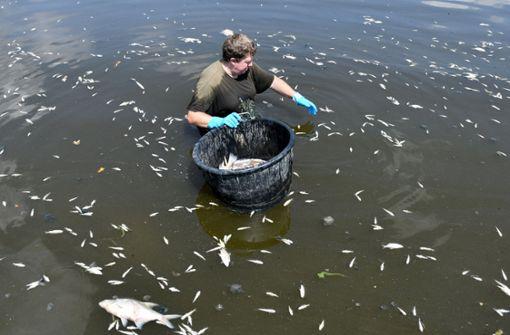 Kein Sauerstoff – Hitze sorgt für Fischsterben