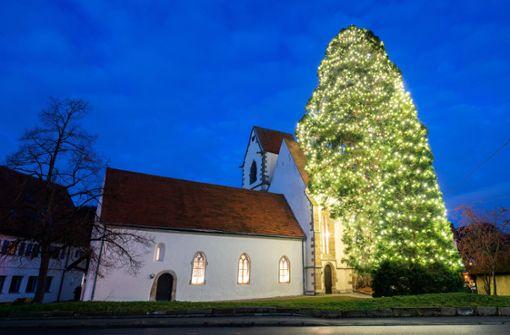 Der Trend geht zu Mega-Weihnachtsbäumen