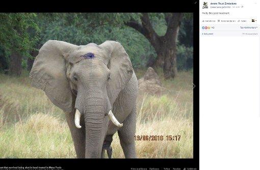 Elefant überlebt Schuss in den Kopf