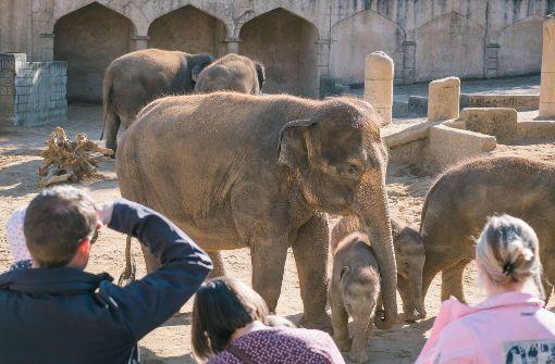 Direktor der Wilhelma verteidigt ähnliche Elefantenhaltung