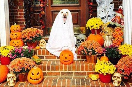 halloween verkleidungen f r hunde bello als geist oder leckerer hotdog petcontent. Black Bedroom Furniture Sets. Home Design Ideas