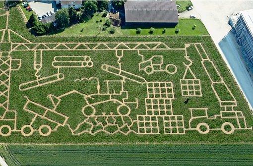 Vergnügliche Irrwege im Maislabyrinth