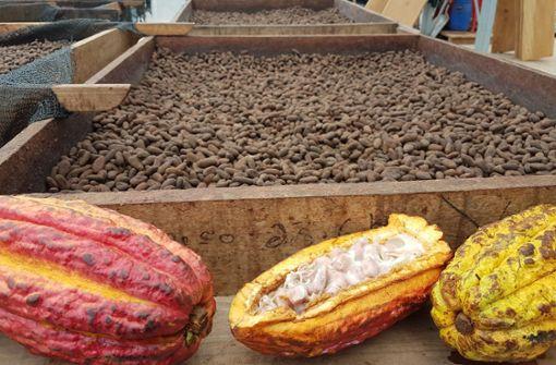 Wo der Kakao für Ritter Sport herkommt