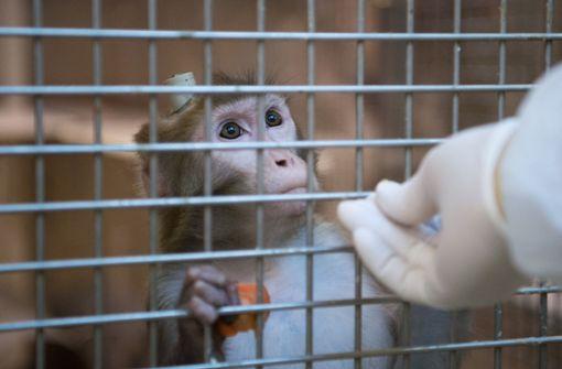 VW, BMW und Daimler sollen Abgase an Affen getestet haben