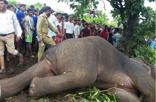 Wildhüter erschießt wilden Elefanten
