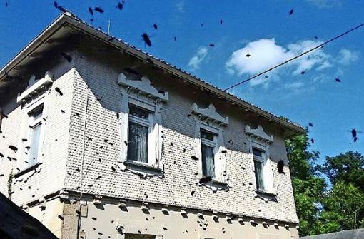 Biene in Freiheit:  Leben ohne Imker