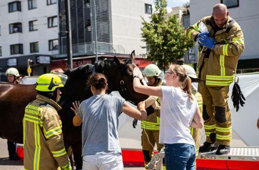 Polizei rettet Pferd aus misslicher Lage