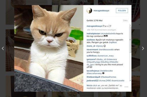 Ist das die neue Grumpy Cat?