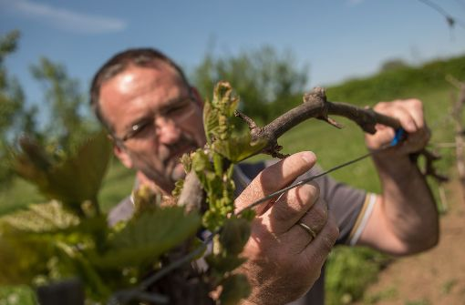 Beim Obstbau droht ein Totalausfall