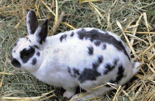 Züchter zeigen Kaninchen und Co.