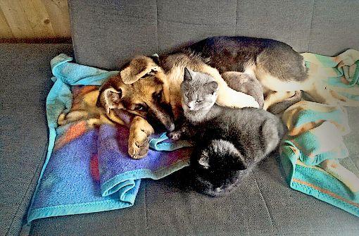 Vermisst: Vom tierischen Trio fehlt jede Spur