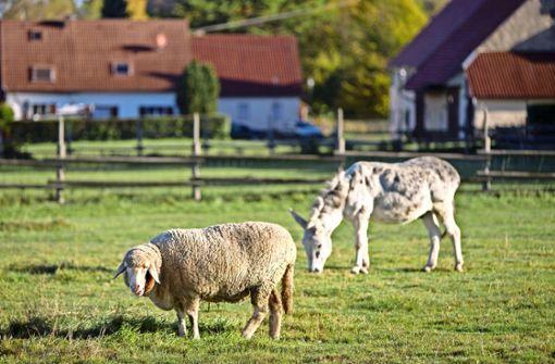 Eselin Elisabeth kann weiter grasen