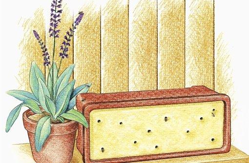 insektenhotel bauen wild sind diese bienen nur dem namen nach web wissen stuttgarter. Black Bedroom Furniture Sets. Home Design Ideas