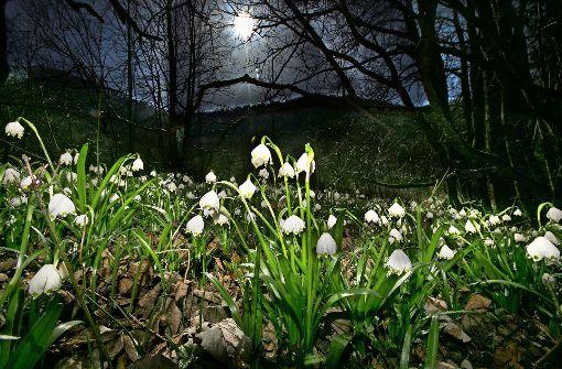 Ein weißer Blütenteppich auf grünem Grund