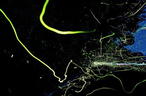 Die Insekten senden Leuchtsignale aus, damit sich Männchen und Weibchen zur Paarung finden Foto: Mysterious/AdobeStock