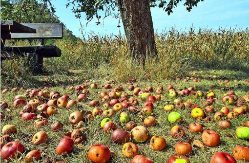 Wohin bloß mit all dem Obst?