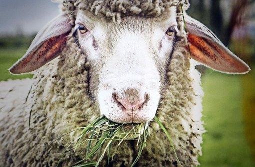 Kritik an tierischen Weihnachtsdarstellern