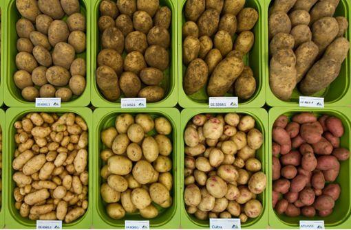 Kartoffeln werden knapp und teurer