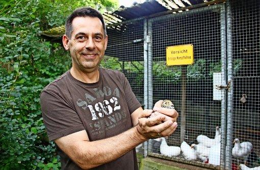 Rainer Salzer hält eine Wachtel. Im Hintergrund sind die Zwergwyandotten zu sehen. Das Schild  ist ein Gag des Vorbesitzers. Foto: Lederer