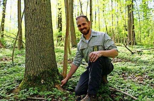 Vermittler zwischen Wald und Mensch
