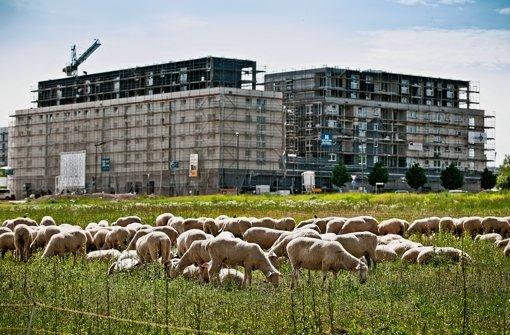 Auf dem Böblinger Flugfeld entstehen derzeit auch Mietwohnungen – in der Region ist das aber eher die Ausnahme, Bauträger verdienen lieber mit Wohneigentum ihr Geld. Foto: Leif Piechowski