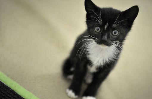 Tierquäler foltern Katze fast zu Tode
