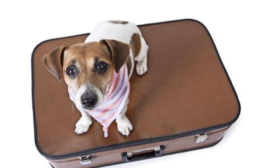 Wer seinen Hund während eines Urlaubs in fremde Hände gibt, muss aufpassen: Verletzt das Tier beim Spielen einen anderen,  kommt schnell die Frage nach der Haftung auf. Foto: 57818074