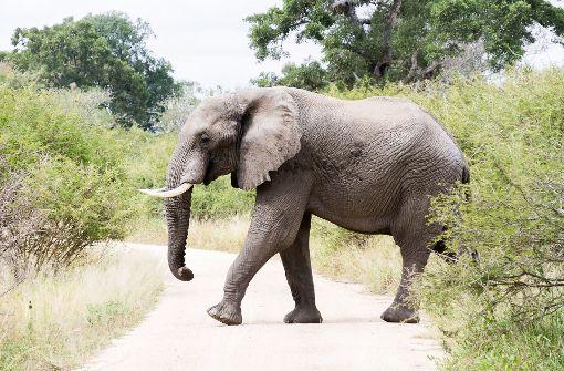 Jäger von Elefanten getötet