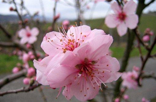 Bunte Blüten gegen das Wintergrau