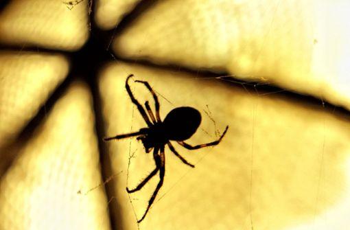 Spinne sorgt bei Länderspiel für Lacher