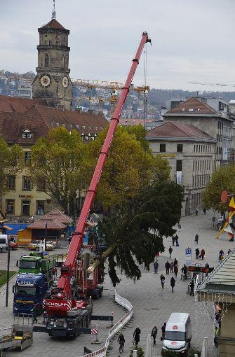 Die rund 25 Meter hohe Rotfichte soll bis zu Beginn des Weihnachtsmarktes am 29. November festlich herausgeputzt werden. Foto: Andreas Rosar Fotoagentur-Stuttg