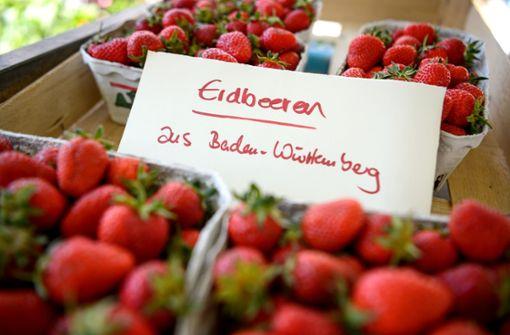 Jeder Deutsche verspeist etwa zweieinhalb Kilogramm an Erdbeeren pro Jahr. Die Frucht war schon bei den Römern beliebt, in Deutschland kam sie im 18. Jahrhundert in Mode und wurde vor allem in Baden-Baden angebaut. In den vergangen Jahren allerdings sind die Freiland-Anbauflächen in Baden-Württemberg leicht geschrumpft.  Foto: dpa-Zentralbild
