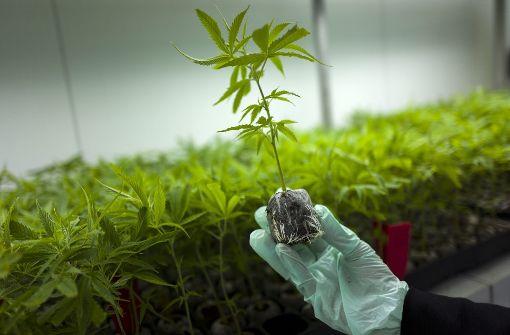 Freigabe von Cannabis auf Rezept beschlossen
