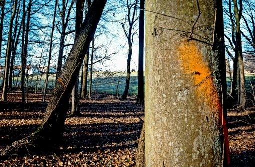 In den Wäldern dröhnen die Kettensägen