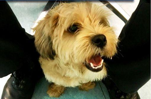 Polizei rettet Hund Tutti aus Stadtbahn