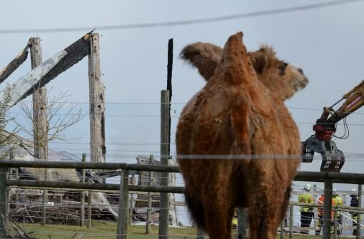 Katastrophe auf Kamelhof bleibt ungeklärt
