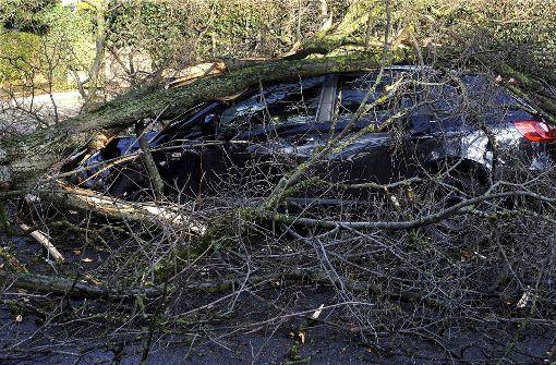 Entwurzelte Bäume, abgedeckte Dächer