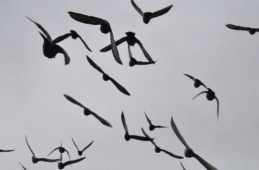 Ein Turm für Tauben