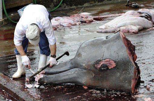 Japan will deutlich mehr Tiere töten