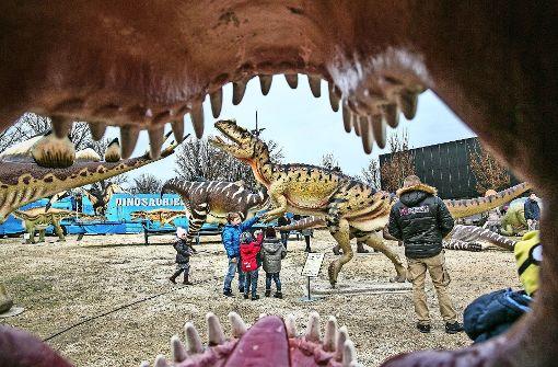 Mitten unter  Dinos