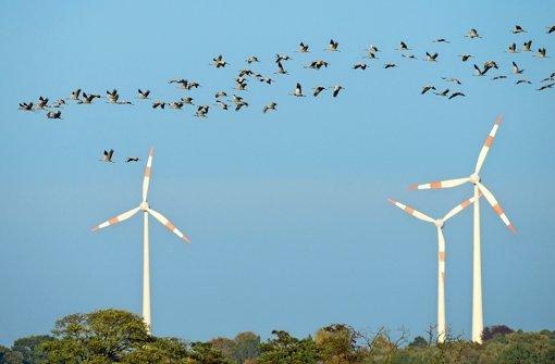 Naturschutz und Windenergie werden häufig gegeneinander ausgespielt Foto: dpa